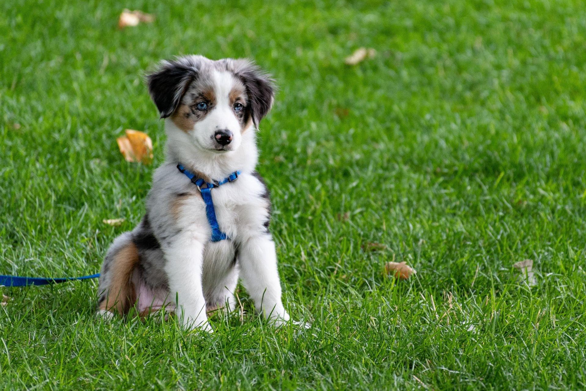 Boomy_Blog1_tot-slot_puppyklas-415a1c99.jpeg